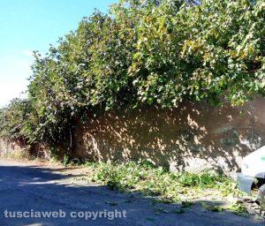 Viterbo - La zona della strada Capretta viene ripulita