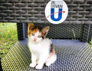 Viterbo - Duchessa, la gattina dell'Unitus