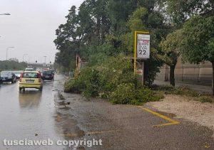 Maltempo - Viterbo - Cimitero - Crollano gli alberi sulle auto