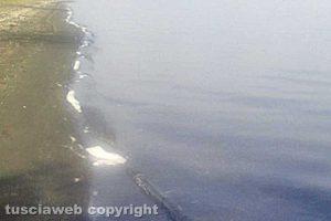 Montefiascone - Schiuma nel lago di Bolsena