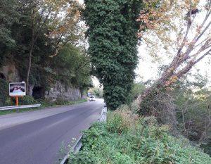 Viterbo - Albero pericolante a ponte dell'Elce
