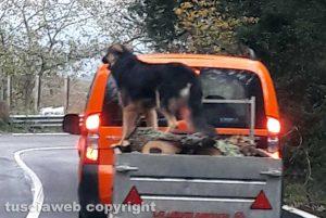 Viterbo - Guida da cani sulla Cimina