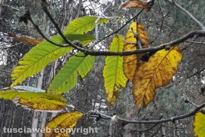Viterbo - Scorci d'autunno