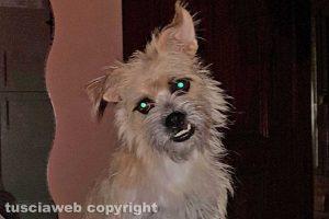 Vetralla - La cagnolina smarrita