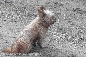 Grotte Santo Stefano - Il cane che si aggira lungo strada Bomarzo