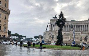 Roma - L'abete a piazza Venezia