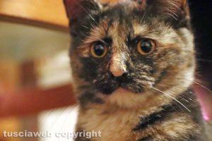 Viterbo - Un gatto