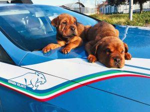 Roma - Poliziotti della squadra volante salvano due cagnolini la sera di Capodanno
