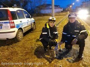 Montefiascone - La polizia locale salva un cagnolino legato a un palo