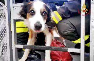 Ancona - Il salvataggio del cane