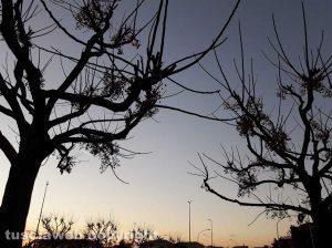 Viterbo - Alberi al tramonto