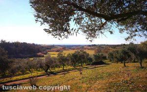 Strada Freddano - La campagna viterbese vista da Castelloscuro