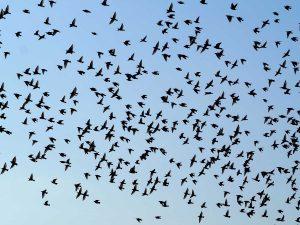 Uno stormo di uccelli