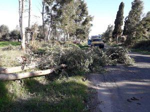 Tarquinia - Volontari Aeopc in azione per alberi caduti e un incendio