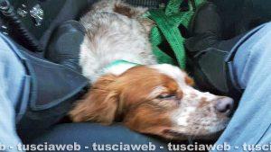 Viterbo - Il cane salvato dai poliziotti della stradale