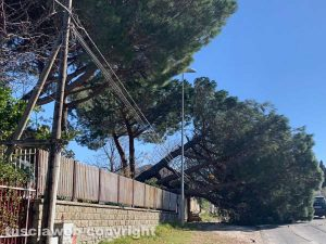 Bagnaia - L'albero e il palo piegati dal vento