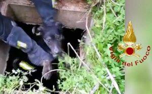 Brindisi - I vigili del fuoco salvano due cuccioli caduti nel pozzetto