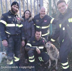 Viterbo - I vigili del fuoco con la labrador recuperata