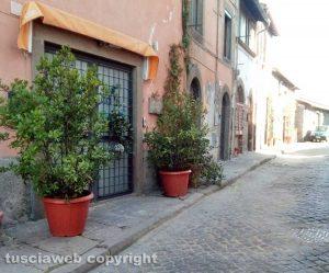 Viterbo - Pianoscarano - Piante sui marciapiedi