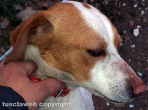 Ritrovata cagnolina sulla Cassia