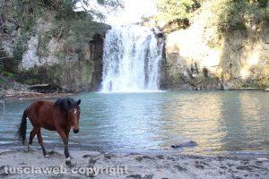 Farnese - La cascata del Salambrone