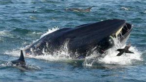 Sudafrica - Uomo inghiottito da una balena