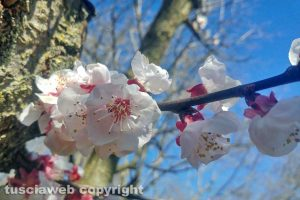 Vallerano - Arriva la primavera