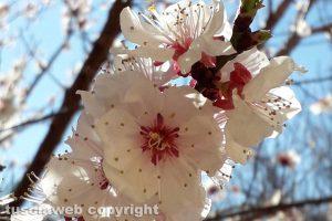 Viterbo - Primavera in giardino