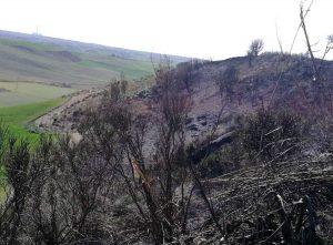Tarquinia - Due ettari di sterpaglie in fiamme in località Pisciarello