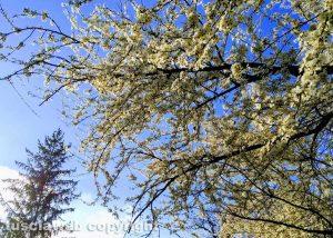 Carbognano - Primavera