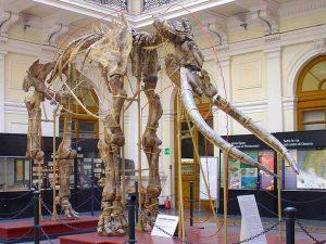 L'elefante antico Italico ritrovato vicino al lago di Bolsena