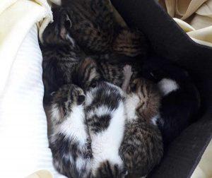 Tarquinia, gattini salvati