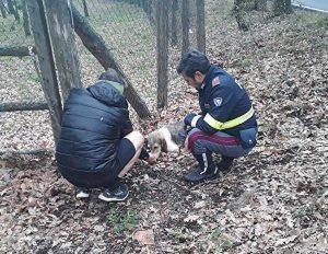 Il cucciolo salvato dagli agenti della polstrada sulla Cimina