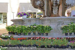 Viterbo - Piante in vendita a piazza delle Erbe durante San Pellegrino in fiore