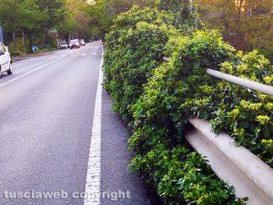 Ponte di Bagnaia invaso da arbusti