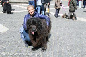 Viterbo - Ventunesimo raduno nazionale cani Terranova