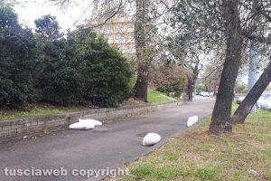 Viterbo - Rifiuti in via Falcone e Borsellino