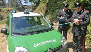 Caserta - I carabinieri forestali in azione