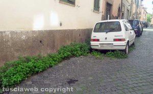 Viterbo - Erbacce in via del Pavone