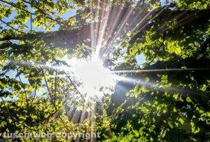 Viterbo - Sole di fine aprile tra gli alberi