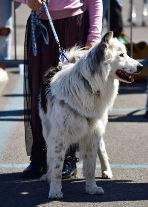 Marta - La prima esposizione canina