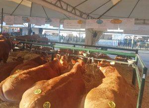 Le aziende viterbesi alla mostra zootecnica di Bastia Umbra