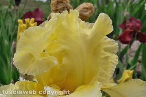 Viterbo - Un fiore dell'orto botanico