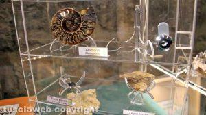 Viterbo - I fossili della Terra dei giganti
