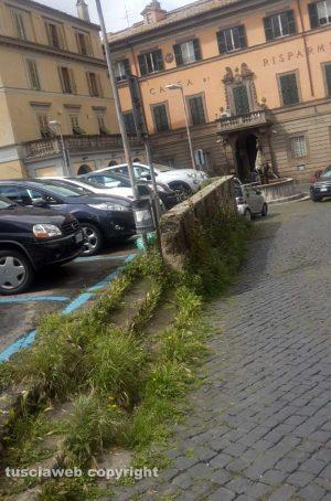 Viterbo - L'erba alta a piazza Dante