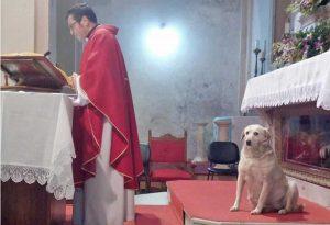Frosinone - Il cane durante la messa