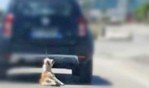 Barletta - Il cane trascinato dall'auto in corsa