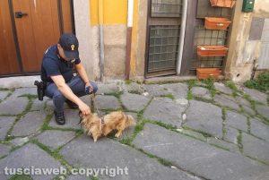 Viterbo - Donna si uccide in via della Morra - Il cagnolino Yumi