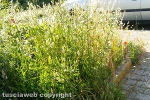 Viterbo - Le erbacce in via Raffaello