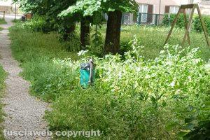 Viterbo - Erbacce al parco in viale Bruno Buozzi